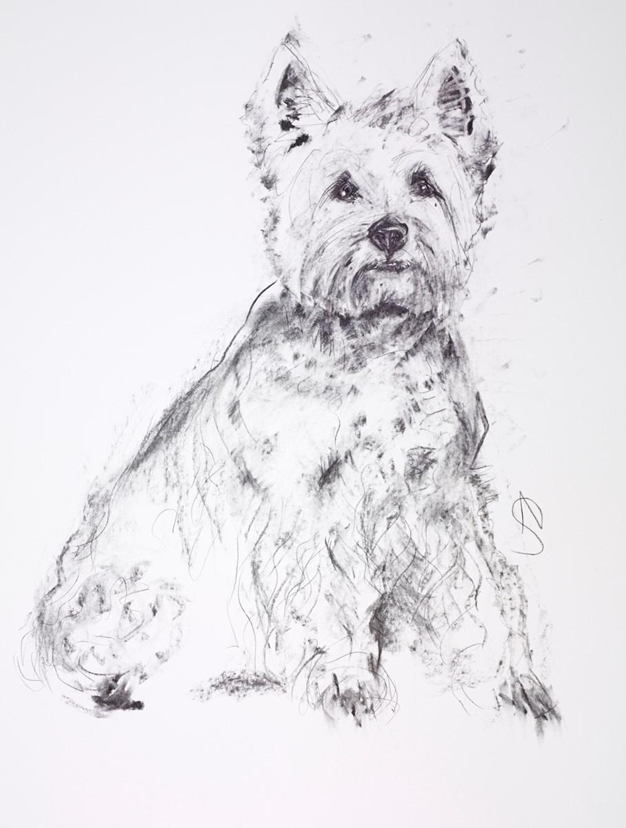 Westie by april shepherd -  sized 20x25 inches. Available from Whitewall Galleries
